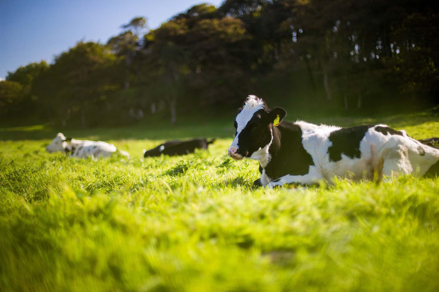 Dairy-Free has many benefits