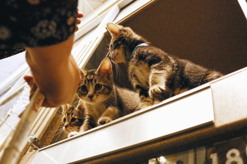 Photo features kittens in an open window.
