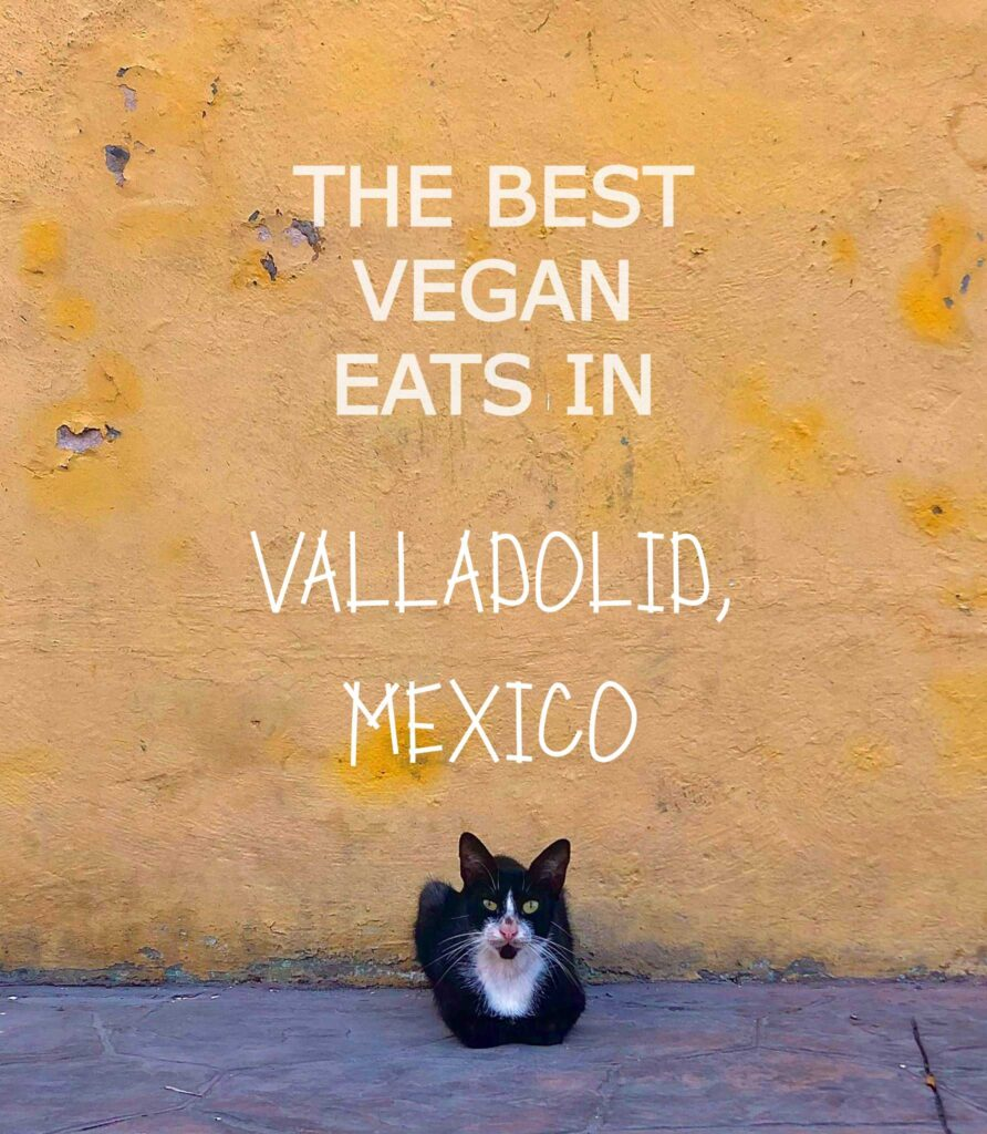 best vegan restaurants in valladolid