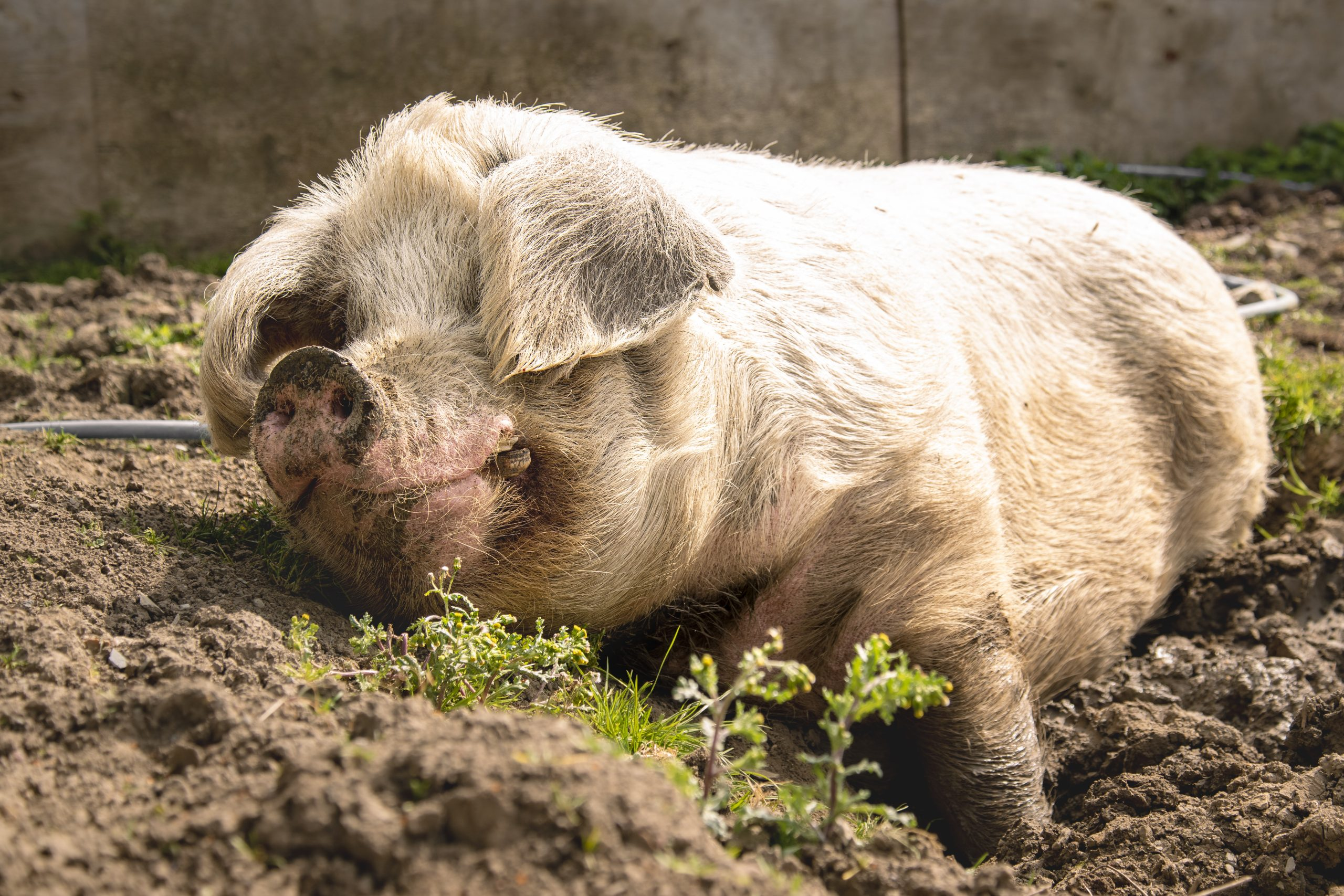 Farm Animal Sanctuary Risks Losing Its Land- It's Up To Us To Help 1