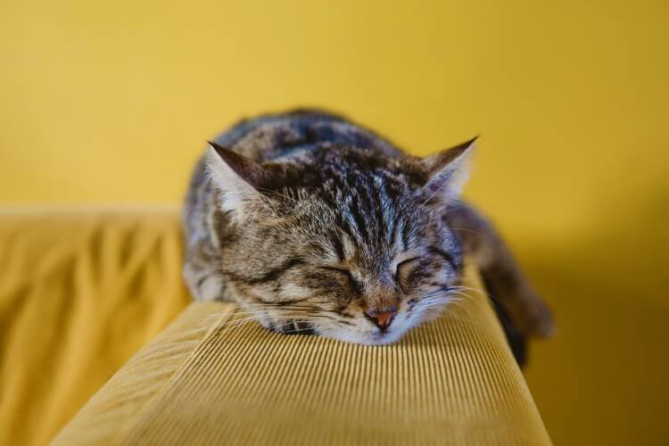 Brown striped cat sleeps on yellow couch