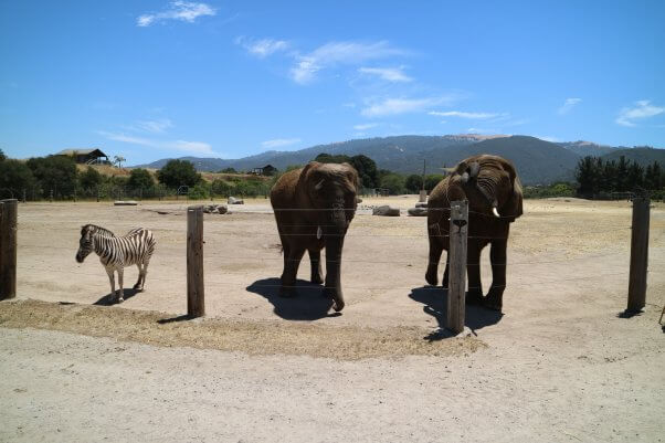 Monterey Zoo: USDA Withholds Records to Conceal Its Own Misconduct