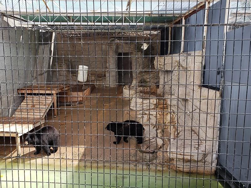 bears in pit