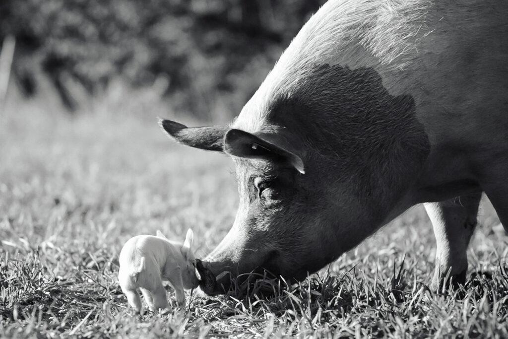 Gunda vegan documentaries