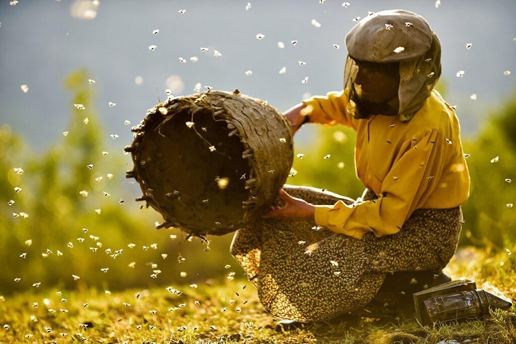 Honeyland vegan documentaries