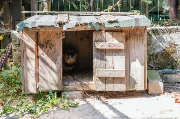 Paulina hides in doghouse