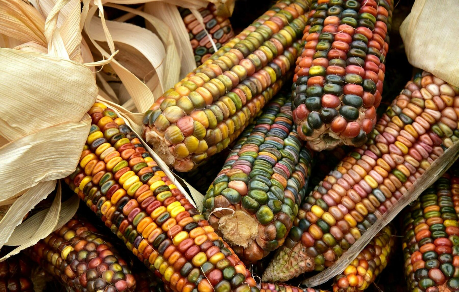 Veganism and Indigenous Peoples